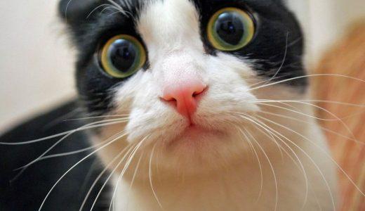 【天啓】18歳女の子のバキュームフェラ最高でした